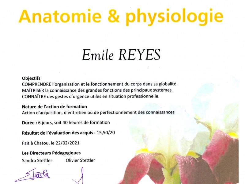 Formation professionnelle en anatomie et physiologie